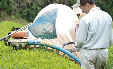 化学肥料を使わず無農薬栽培を始める